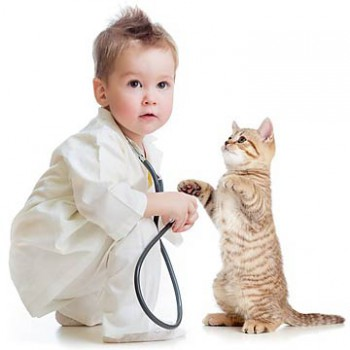 taking-your-cat-to-vet